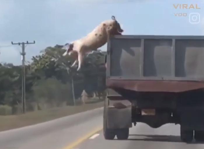 Zvířata bojující o přežití … video